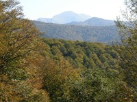 Selva de Irati, Pirineo Navarro