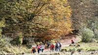 Bosques Mágicos: Hayedo de Montejo