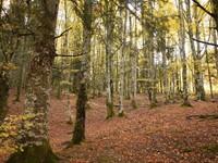 Bosques Mágicos: Hayedo Tejera Negra