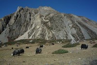 Trek del Circuito del Annapurna hasta Jomsom. Nepal