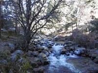 Salida Marcha Nórdica al Tejo de Borondillo