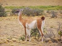 Senderismo en las dos Patagonia y Aventura por la Ruta 40 y la Carretera Austral