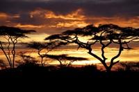 Safari Karibu Tanzania