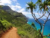 Hawaii activo