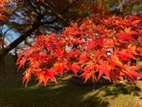 Japón, colores del otoño. Senderos de la Diamond Route y Alpes Japoneses