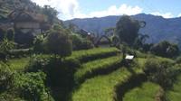 Trek del Kanchenjunga (S-N). Nepal